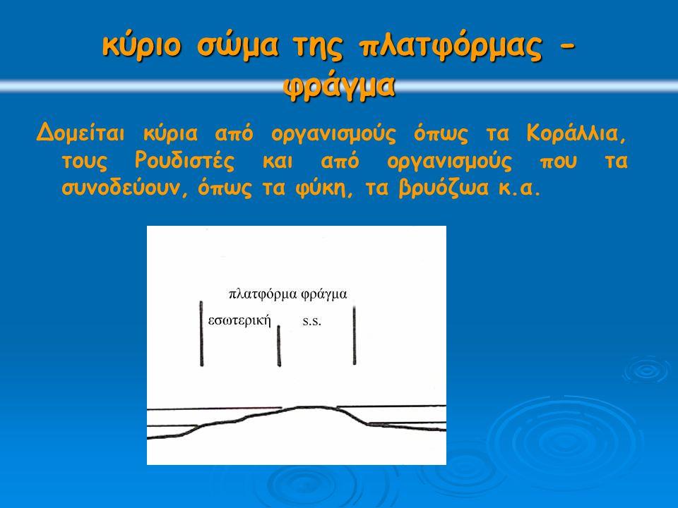 εσωτερική πλατφόρμα βρίσκεται προς την πλευρά της ηπείρου και χαρακτηρίζεται από ένα «περιορισμένο» θαλάσσιο περιβάλλον.
