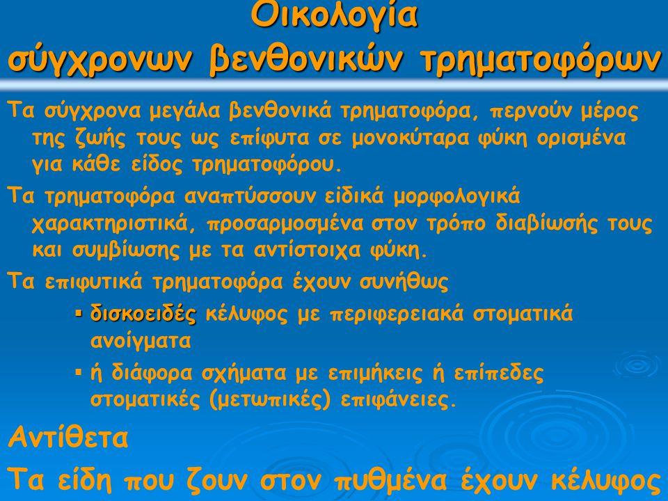 παραλληλισμός βιοζωνών διαφορετικών επαρχιών πανίδων 3 επαρχίες ενδημικών πανίδων 1: Navarella, 2: Hellenocyclina, 3: Rhapydionina liburnica, 4: Loftusia, 5: Laffiteina 1η επαρχία με Loftusia, περιλαμβάνει Σομαλία, Αραβία, Ιράν, Ιράκ Τουρκία, εσωτερικές Δειναρίδες s.l.