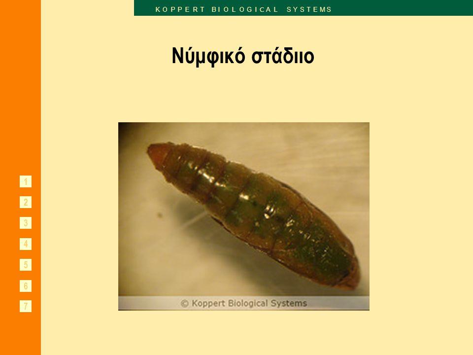 1 2 3 6 7 K O P P E R T B I O L O G I C A L S Y S T E M S 4 5 Φερομόνες 'Pherodis' 1.Οι κάψουλες απελευθερώνουν την οσμή της φερομόνης φύλου ενός και μόνο είδους.