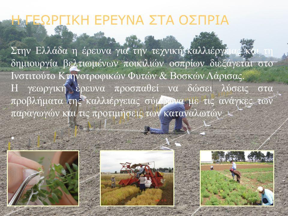 Η ΓΕΩΡΓΙΚΗ ΕΡΕΥΝΑ ΣΤΑ ΟΣΠΡΙΑ Στην Ελλάδα η έρευνα για την τεχνική καλλιέργειας και τη δημιουργία βελτιωμένων ποικιλιών οσπρίων διεξάγεται στο Ινστιτού