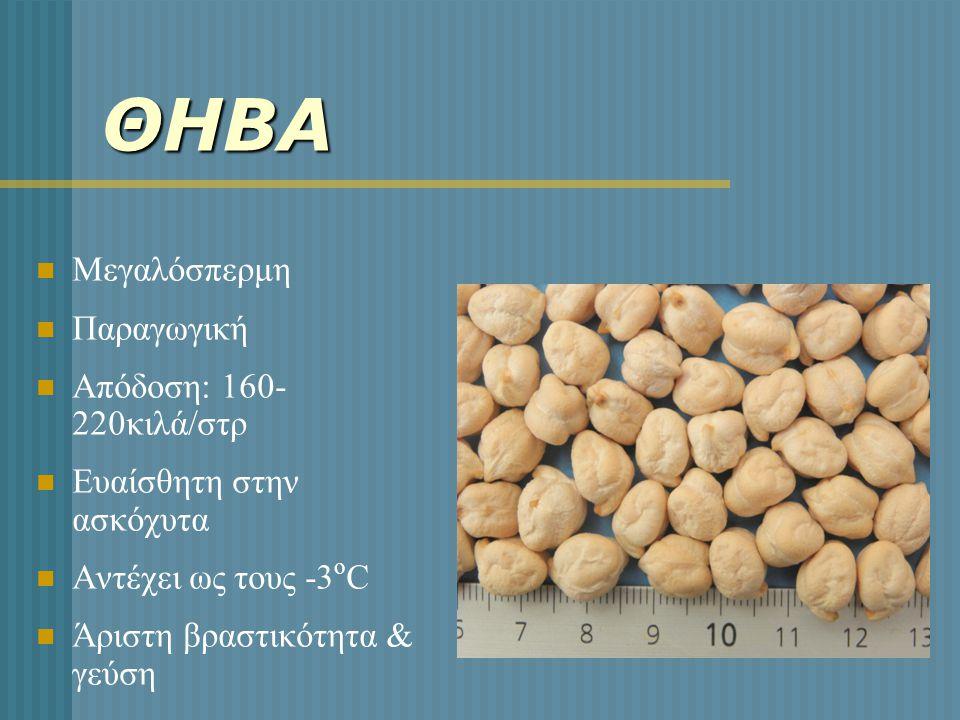 ΘΗΒΑ  Μεγαλόσπερμη  Παραγωγική  Απόδοση: 160- 220κιλά/στρ  Ευαίσθητη στην ασκόχυτα  Αντέχει ως τους -3 ο C  Άριστη βραστικότητα & γεύση