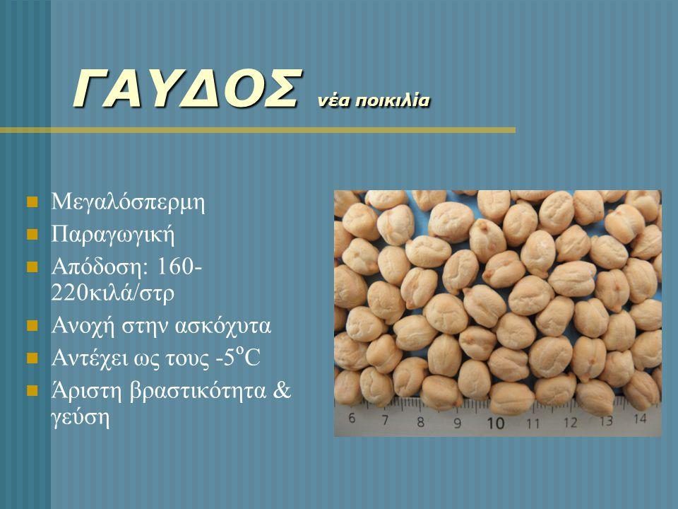 ΓΑΥΔΟΣ νέα ποικιλία  Μεγαλόσπερμη  Παραγωγική  Απόδοση: 160- 220κιλά/στρ  Ανοχή στην ασκόχυτα  Αντέχει ως τους -5 ο C  Άριστη βραστικότητα & γεύ