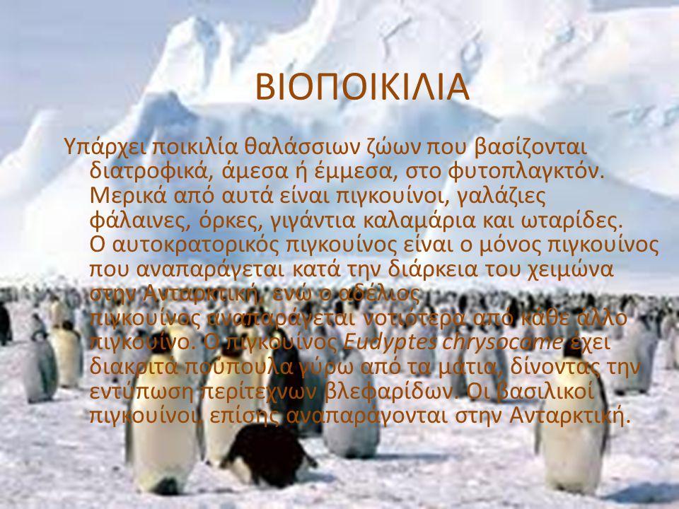 ΒΙΟΠΟΙΚΙΛΙΑ Υπάρχει ποικιλία θαλάσσιων ζώων που βασίζονται διατροφικά, άμεσα ή έμμεσα, στο φυτοπλαγκτόν. Μερικά από αυτά είναι πιγκουίνοι, γαλάζιες φά
