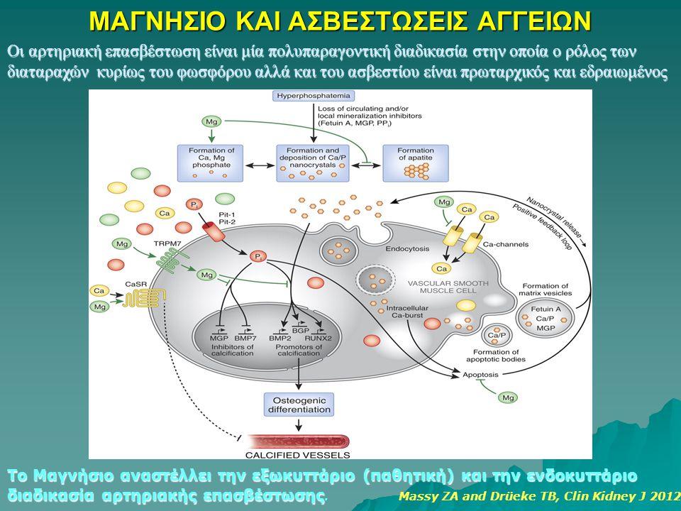ΜΑΓΝΗΣΙΟ ΚΑΙ ΑΣΒΕΣΤΩΣΕΙΣ ΑΓΓΕΙΩΝ Το Μαγνήσιο αναστέλλει την εξωκυττάριο (παθητική) και την ενδοκυττάριο διαδικασία αρτηριακής επασβέστωσης διαδικασία αρτηριακής επασβέστωσης.