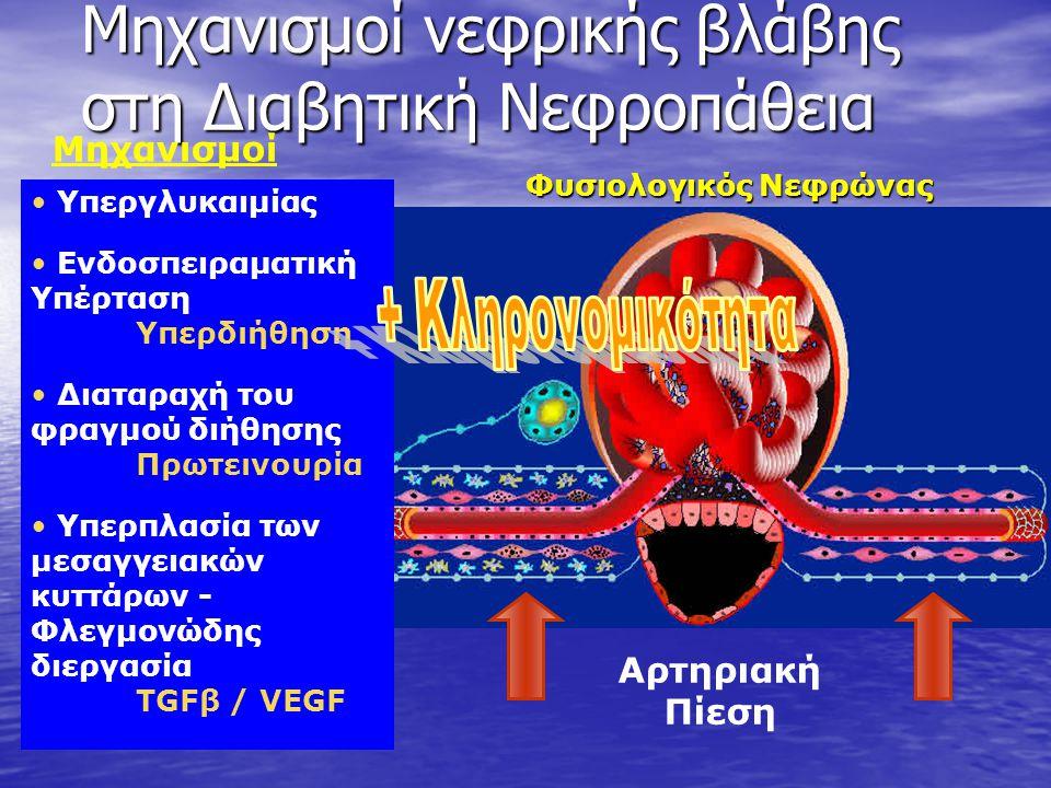 • Υπεργλυκαιμίας • Ενδοσπειραματική Υπέρταση Υπερδιήθηση • Διαταραχή του φραγμού διήθησης Πρωτεινουρία • Υπερπλασία των μεσαγγειακών κυττάρων - Φλεγμονώδης διεργασία TGFβ / VEGF Φυσιολογικός Νεφρώνας Μηχανισμοί νεφρικής βλάβης στη Διαβητική Νεφροπάθεια Μηχανισμοί Αρτηριακή Πίεση
