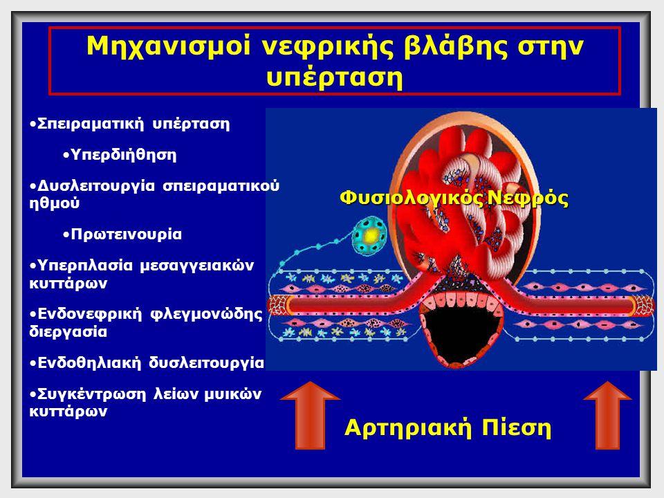 Λειτουργικά •Μείωση GFR •Πρωτεινουρία Δομικά •Glomular basement membrane changes •Expanded mesangial matrix •Glomerulosclerosis •Tubulo-interstitial fibrosis Υπέρταση Νεφρική βλάβη στην υπέρταση Επακόλουθα Renal Failure