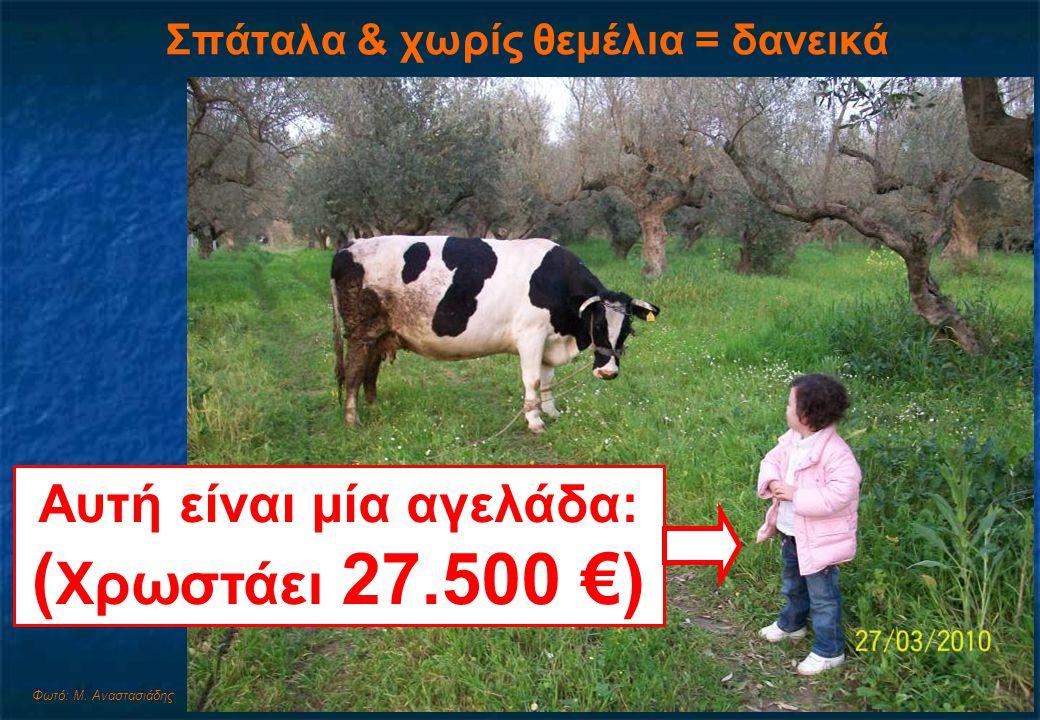 Σπάταλα & χωρίς θεμέλια = δανεικά Αυτή είναι μία αγελάδα: ( Χρωστάει 27.500 €) Φωτό: Μ.