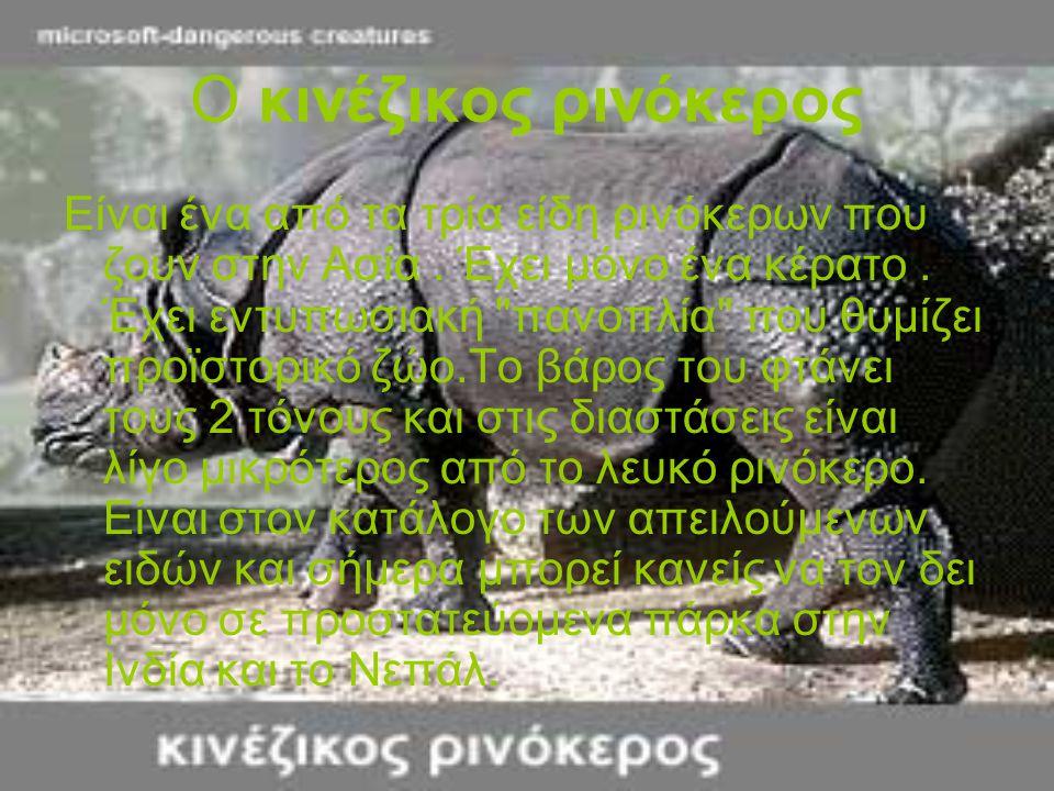 Ο κινέζικος ρινόκερος Είναι ένα από τα τρία είδη ρινόκερων που ζουν στην Ασία. Έχει μόνο ένα κέρατο. Έχει εντυπωσιακή