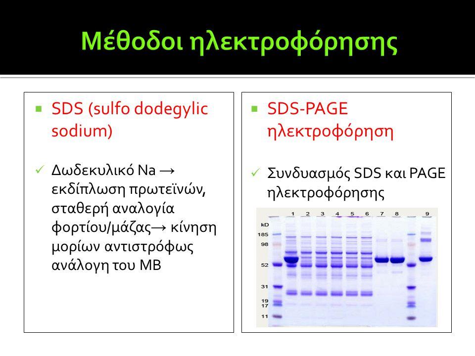  SDS (sulfo dodegylic sodium)  Δωδεκυλικό Na → εκδίπλωση πρωτεϊνών, σταθερή αναλογία φορτίου/μάζας → κίνηση μορίων αντιστρόφως ανάλογη του ΜΒ  SDS-