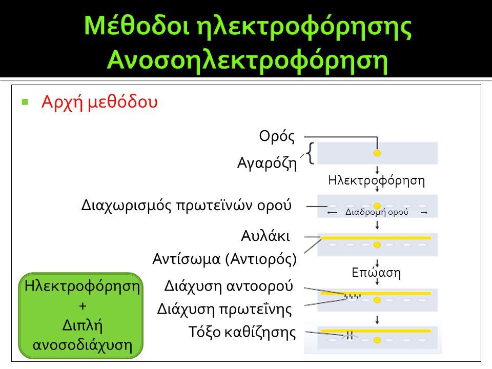  Αρχή μεθόδου Ορός Αγαρόζη Διαχωρισμός πρωτεϊνών ορού Αυλάκι Αντίσωμα (Αντιορός) Διάχυση αντοορού Διάχυση πρωτεΐνης Τόξο καθίζησης Επώαση Διαδρομή ορ