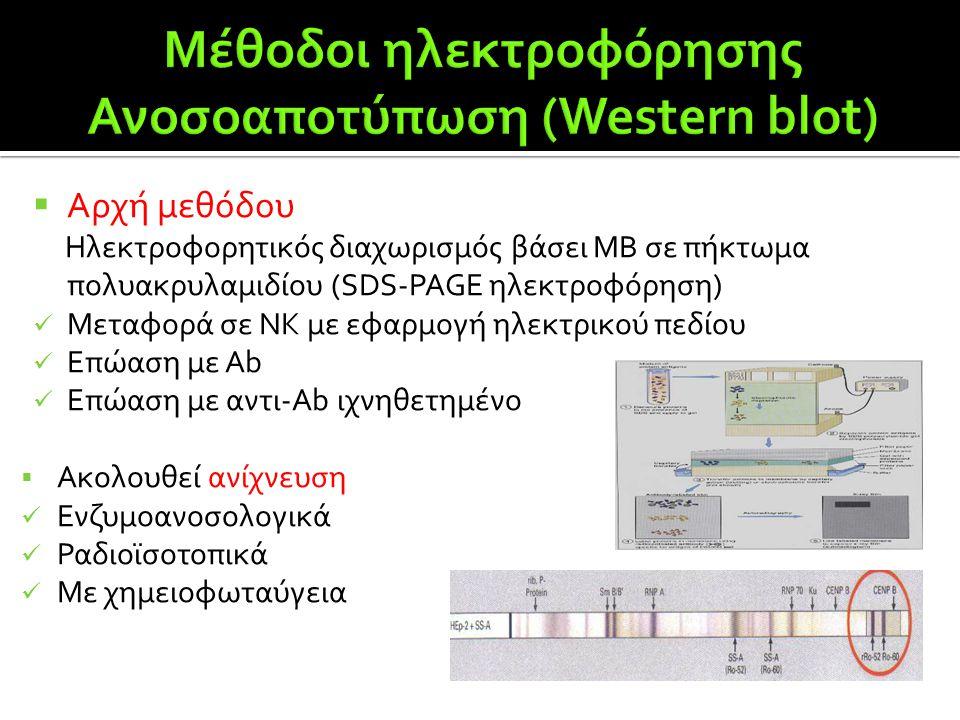  Αρχή μεθόδου Ηλεκτροφορητικός διαχωρισμός βάσει ΜΒ σε πήκτωμα πολυακρυλαμιδίου (SDS-PAGE ηλεκτροφόρηση)  Μεταφορά σε ΝΚ με εφαρμογή ηλεκτρικού πεδί