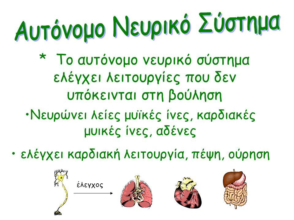 Σωματικό: από ΚΝΣ προς σκελετικούς μύες. Υπόκειται στη βούληση. Νευρικές οδοί που δεν διακόπτονται Αυτόνομο:από ΚΝΣ προς λείες μυικές ίνες, αδένες. Δε