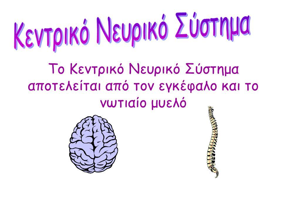 Ελέγχει όλες τις λειτουργίες του σώματος Αποτελείται από: Τον εγκέφαλοΤο νωτιαίο μυελό Τα νεύρα
