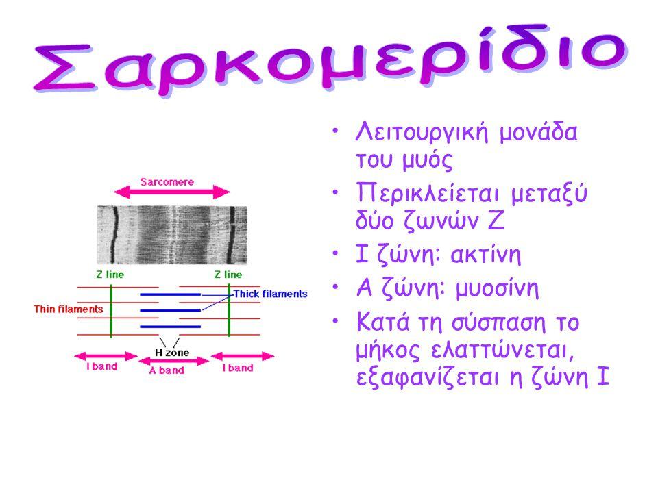 •Εμφανίζει εγκάρσια γράμμωση •Κύτταρα (μυϊκές ίνες) πολυπύρηνα •Νεύρωση από το ΚΝΣ