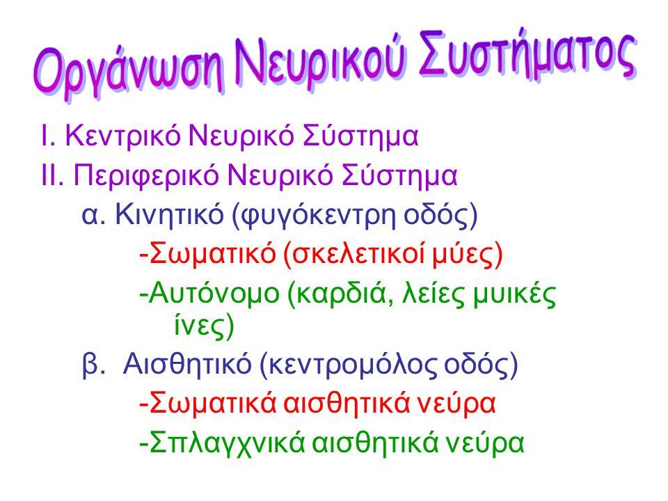 •Εγκεφαλικά νεύρα •Νωτιαία νεύρα Το Περιφερικό ΝΣ αποτελείται από τα νεύρα