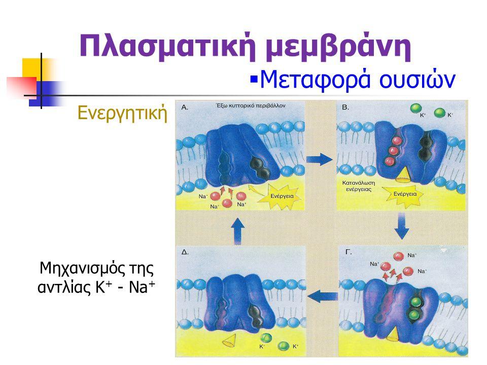 Πλασματική μεμβράνη  Μεταφορά ουσιών Ενεργητική Μηχανισμός της αντλίας K + - Na +
