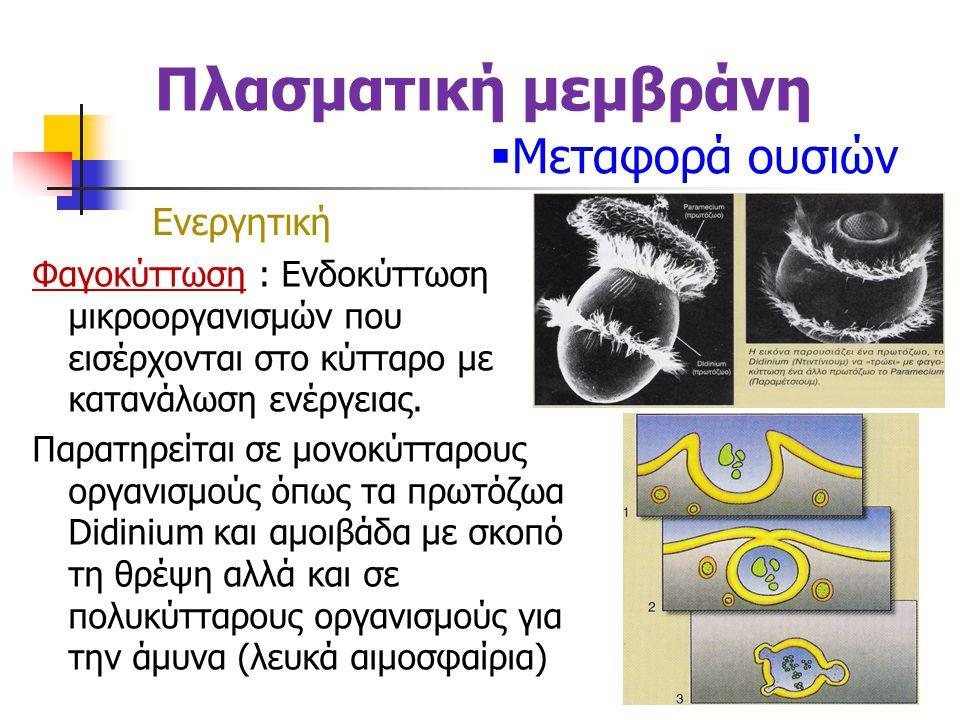Πλασματική μεμβράνη  Μεταφορά ουσιών Φαγοκύττωση : Ενδοκύττωση μικροοργανισμών που εισέρχονται στο κύτταρο με κατανάλωση ενέργειας.