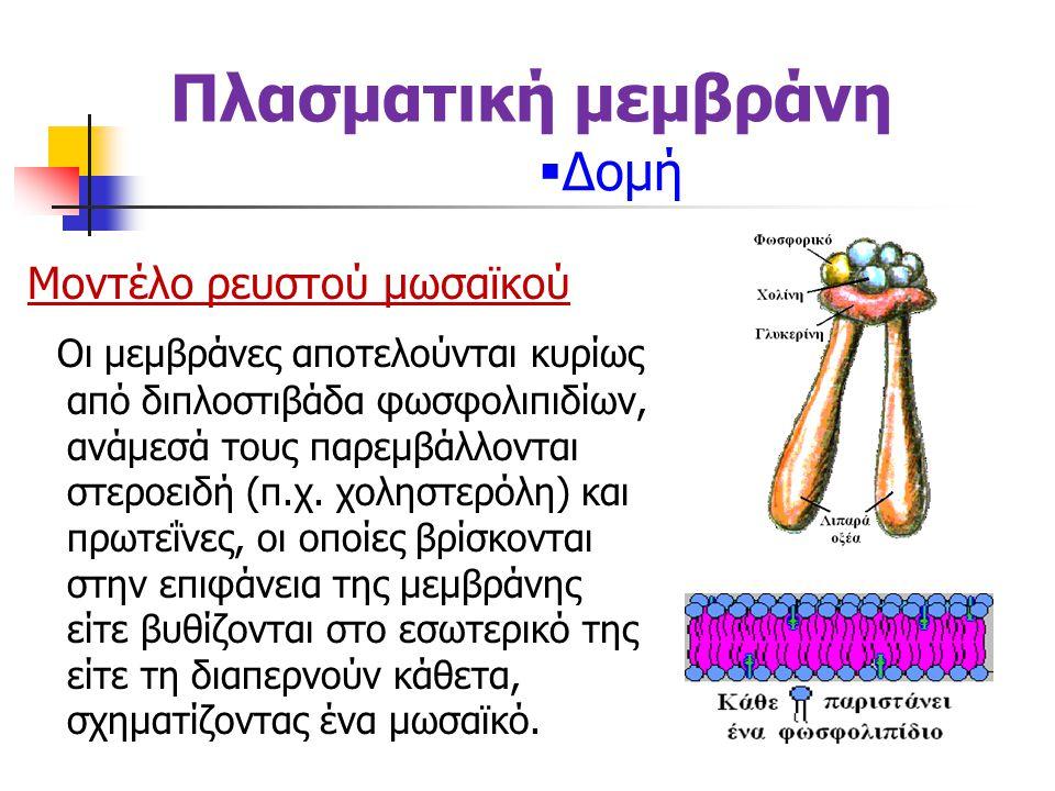 Μοντέλο ρευστού μωσαϊκού Οι μεμβράνες αποτελούνται κυρίως από διπλοστιβάδα φωσφολιπιδίων, ανάμεσά τους παρεμβάλλονται στεροειδή (π.χ.