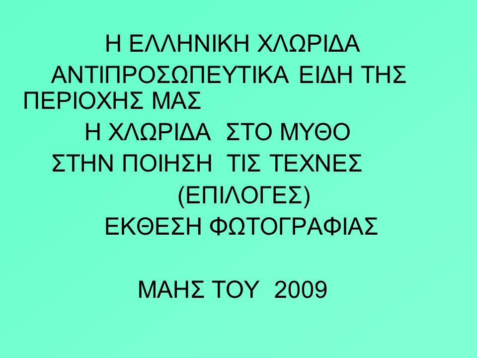 TA NΟΥΦΑΡΑ ΣΤΟΝ ΠΑΜΙΣΟ ΠΟΤΑΜΟ