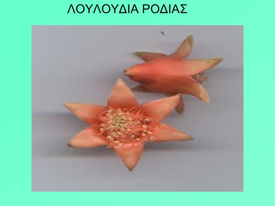 Απόσπασμα από το ποίημα του Οδυσσέα Ελύτη Η ΤΡΕΛΗ ΡΟΔΙΑ ….. Όταν στους κάμπους που ξυπνούν τα ολόγυμνα κορίτσια θερίζουνε με τα ξανθά τους χέρια τα τρ
