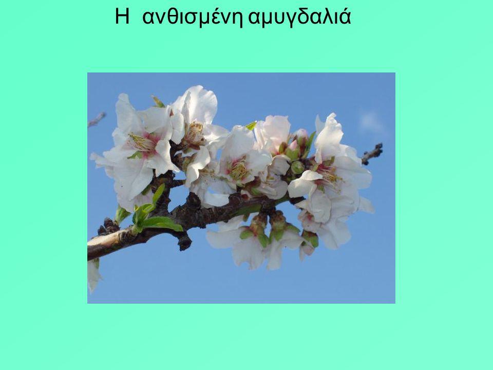 ΑΝΔΡΕΑΣ ΕΜΠΕΙΡΙΚΟΣ ΤΡΙΑ ΜΙΚΡΑ ΠΟΙΗΜΑΤΑ 1 Η ποίησις είναι ανάπτυξις στίλβοντος ποδηλάτου.Μέσα της όλοι μεγαλώνουμε. Οι δρόμοι της είναι λευκοί. Τα άνθη