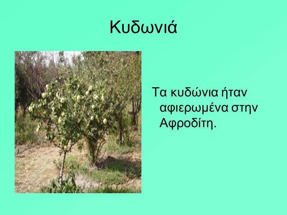 Ο Όμηρος περιγράφει το χτήμα του Αλκίνοου: << …εκεί απιδιές, ροδιές, μηλιές με τα λαμπρά τα μήλα Συκιές γλυκόκαρπες κι ελιές γερές και φουντωμένες δε