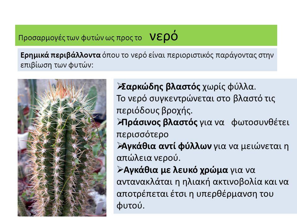 Προσαρμογές των φυτών ως προς το νερό Ερημικά περιβάλλοντα όπου το νερό είναι περιοριστικός παράγοντας στην επιβίωση των φυτών:  Σαρκώδης βλαστός χωρίς φύλλα.