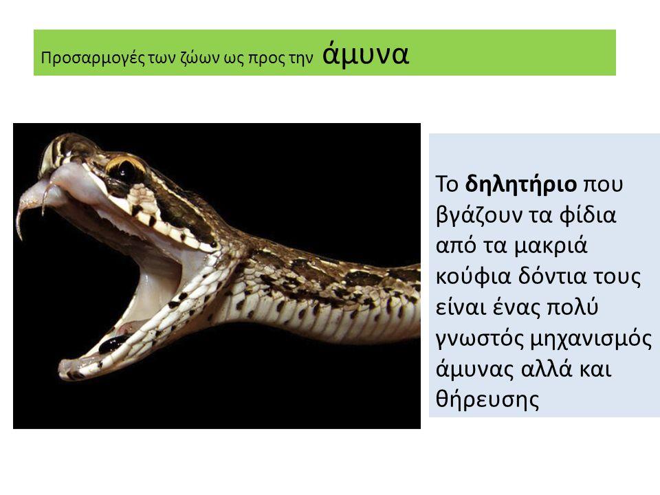 Προσαρμογές των ζώων ως προς την άμυνα Το δηλητήριο που βγάζουν τα φίδια από τα μακριά κούφια δόντια τους είναι ένας πολύ γνωστός μηχανισμός άμυνας αλλά και θήρευσης