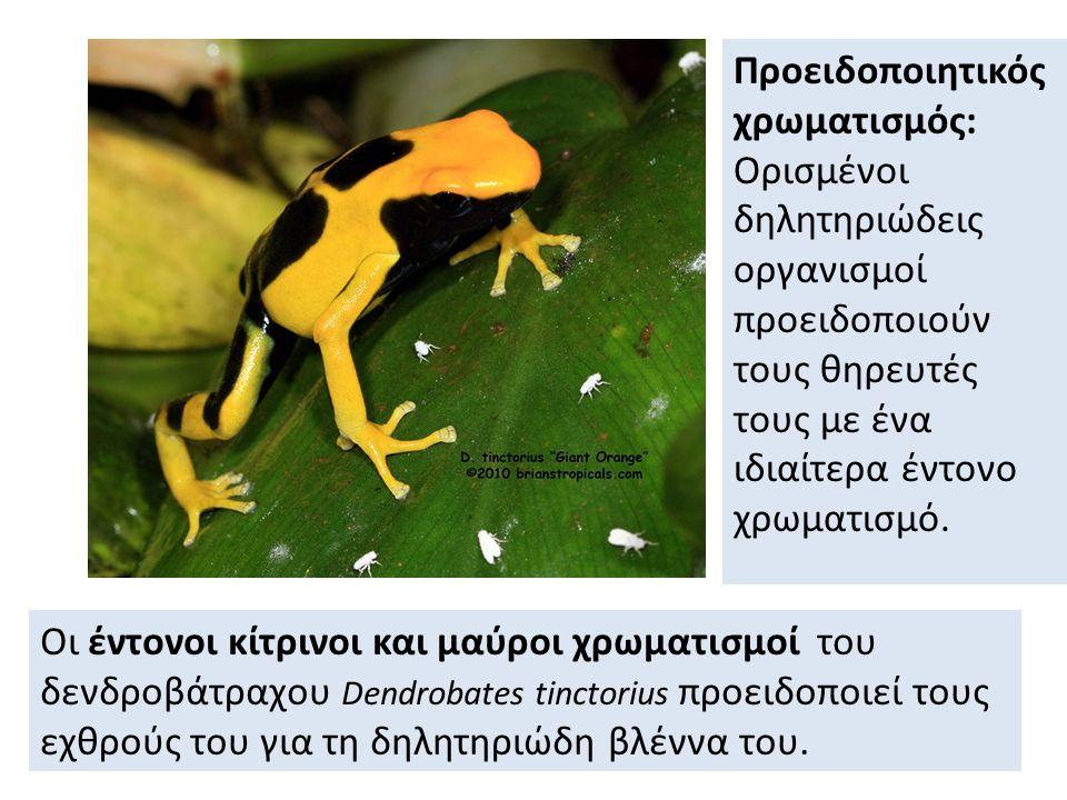 Οι έντονοι κίτρινοι και μαύροι χρωματισμοί του δενδροβάτραχου Dendrobates tinctorius προειδοποιεί τους εχθρούς του για τη δηλητηριώδη βλέννα του.