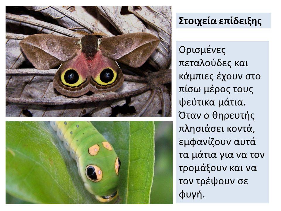 Ορισμένες πεταλούδες και κάμπιες έχουν στο πίσω μέρος τους ψεύτικα μάτια.