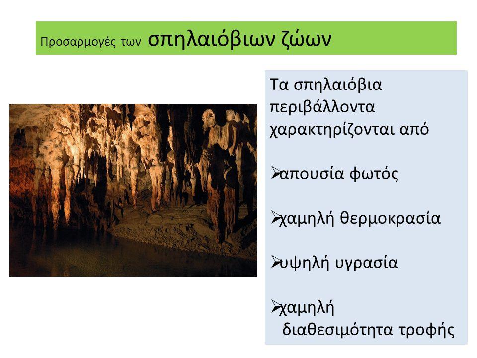 Τα σπηλαιόβια περιβάλλοντα χαρακτηρίζονται από  απουσία φωτός  χαμηλή θερμοκρασία  υψηλή υγρασία  χαμηλή διαθεσιμότητα τροφής Προσαρμογές των σπηλαιόβιων ζώων