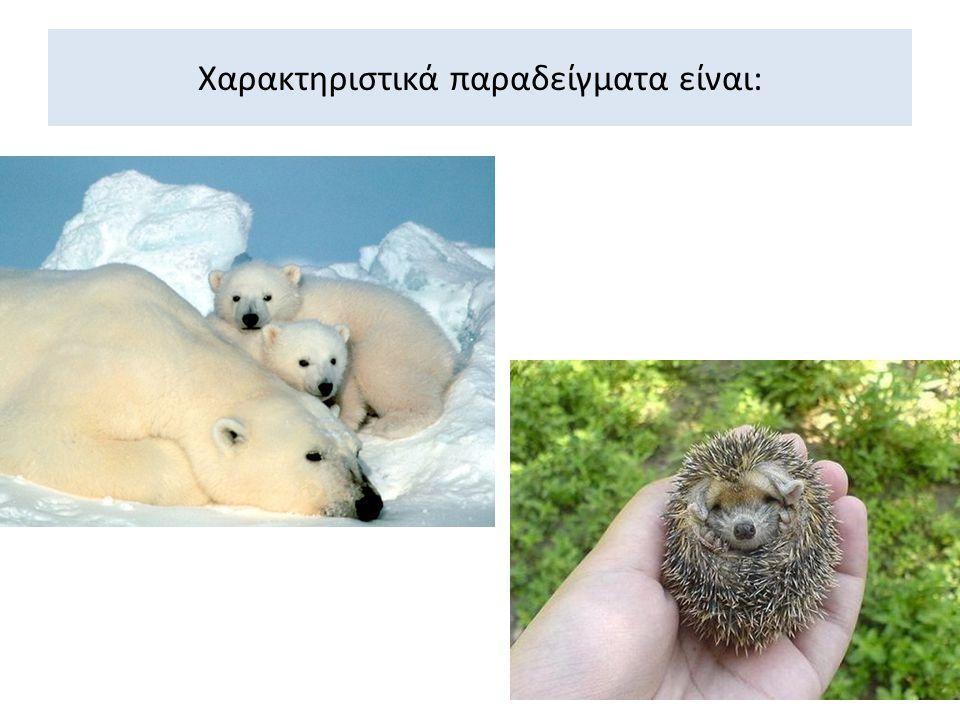 Προσαρμογές ζώων :  Κινούνται κυρίως νύχτα και μέσα σε λαγούμια.