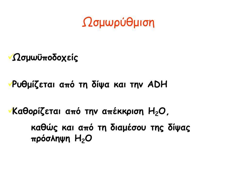 Ωσμωρύθμιση  Ωσμωϋποδοχείς  Ρυθμίζεται από τη δίψα και την ADH  Καθορίζεται από την απέκκριση H 2 O, καθώς και από τη διαμέσου της δίψας πρόσληψη H