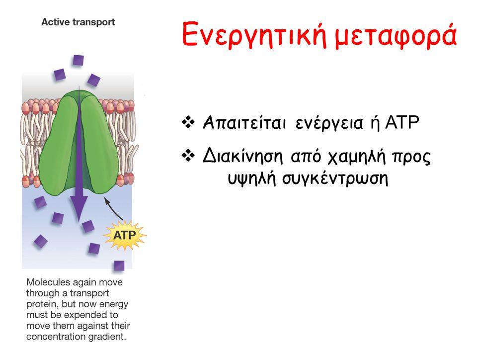 Ενεργητική μεταφορά  Απαιτείται ενέργεια ή ATP  Διακίνηση από χαμηλή προς υψηλή συγκέντρωση