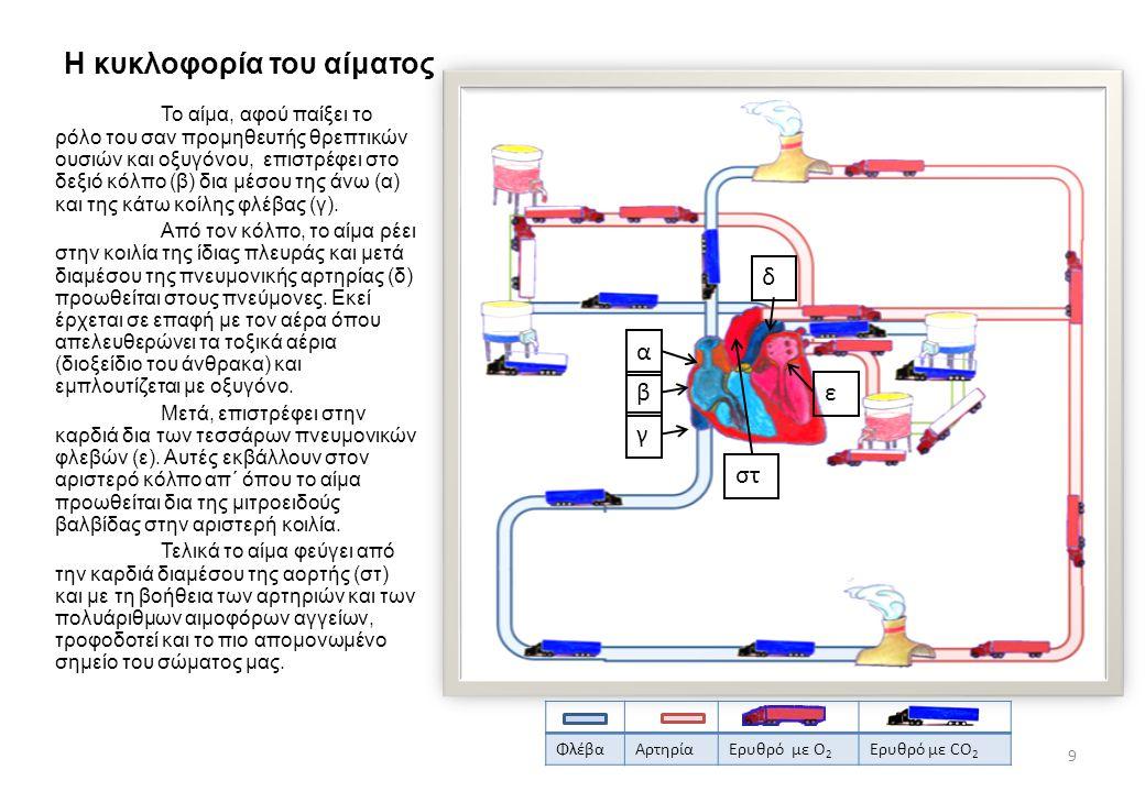 Η κυκλοφορία του αίματος Το αίμα, αφού παίξει το ρόλο του σαν προμηθευτής θρεπτικών ουσιών και οξυγόνου, επιστρέφει στο δεξιό κόλπο (β) δια μέσου της