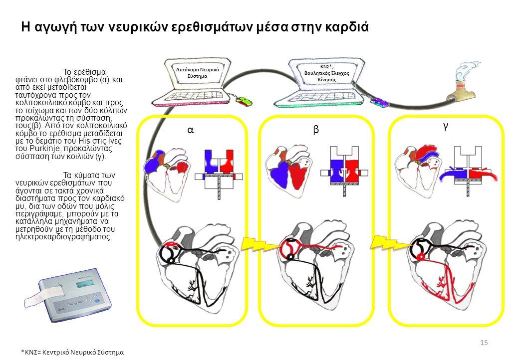 Η αγωγή των νευρικών ερεθισμάτων μέσα στην καρδιά Αυτόνομο Νευρικό Σύστημα ΚΝΣ*, Βουλητικός Έλεγχος Κίνησης *ΚΝΣ= Κεντρικό Νευρικό Σύστημα 15 Το ερέθι