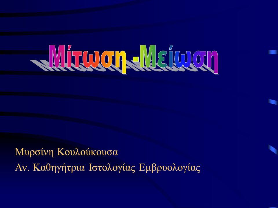 Τελόφαση •Αποσύνδεση των μεμονωμένων χρωματίδων από τους μικροσωληνίσκους του κινητοχώρου που εξαφανίζονται •Ανασχηματισμός της πυρηνικής μεμβράνης •Αποσυσπείρωση χρωμοσωμάτων-χρωματίνη μεσόφασης •Αύξηση του μήκους των μικροσωληνίσκων της ατράκτου •Έναρξη κυτταρικής δραστηριότητας, μεταγραφή RNA, σύνθεση πρωτεϊνών