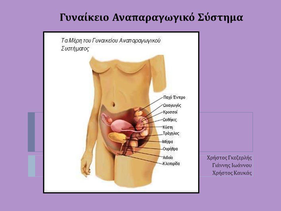 Τι είναι το γυναικείο αναπαραγωγικό σύστημα ; Ποια τα μέρη του ; Ποιες οι λειτουργίες του ; Ποια τα χαρακτηριστικά του ; Αιδοίο Το αιδοίο ανήκει στα εξωτερικά γεννητικά όργανα της γυναίκας.