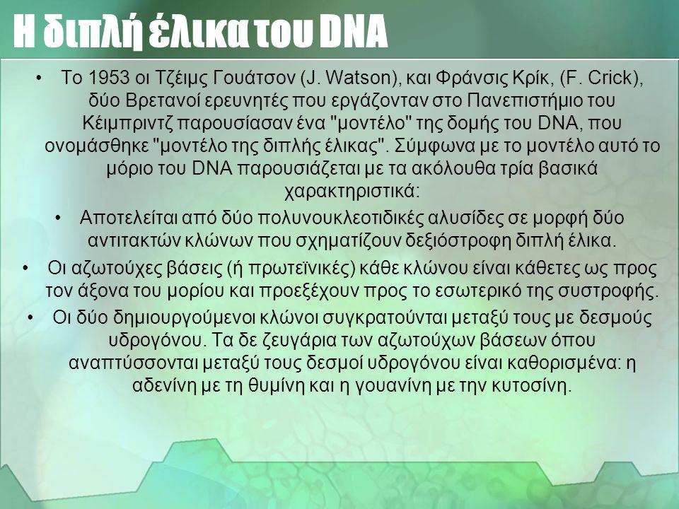 Δομή του DNA Η διαμόρφωση των μεγάλων μορίων του DNA στο χώρο έχει τη μορφή δύο επιμήκων αλύσεων, οι οποίες συστρέφονται ελικοειδώς μεταξύ τους. Οι αζ