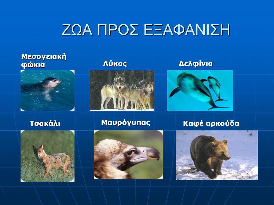 ΖΩΑ ΠΡΟΣ ΕΞΑΦΑΝΙΣΗ Μεσογειακή φώκια ΛύκοςΔελφίνια ΤσακάλιΜαυρόγυπας Καφέ αρκούδα