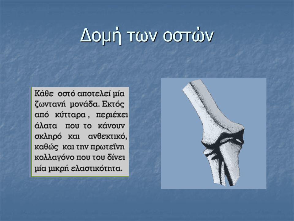 Οστά άνω άκρου