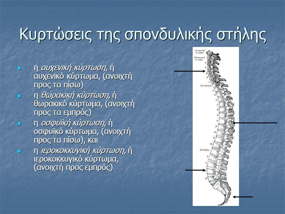 Κυρτώσεις της σπονδυλικής στήλης  η αυχενική κύρτωση, ή αυχενικό κύρτωμα, (ανοιχτή προς τα πίσω)  η θωρακική κύρτωση, ή θωρακικό κύρτωμα, (ανοιχτή π