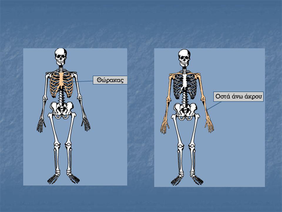 Κυρτώσεις της σπονδυλικής στήλης  η αυχενική κύρτωση, ή αυχενικό κύρτωμα, (ανοιχτή προς τα πίσω)  η θωρακική κύρτωση, ή θωρακικό κύρτωμα, (ανοιχτή προς τα εμπρός)  η οσφυϊκή κύρτωση, ή οσφυϊκό κύρτωμα, (ανοιχτή προς τα πίσω), και  η ιεροκοκκυγική κύρτωση, ή ιεροκοκκυγικό κύρτωμα, (ανοιχτή προς εμπρός)