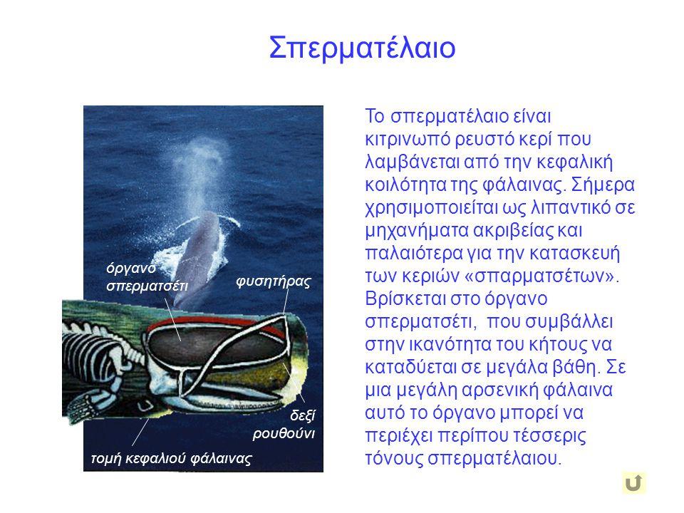 Σπερματέλαιο Το σπερματέλαιο είναι κιτρινωπό ρευστό κερί που λαμβάνεται από την κεφαλική κοιλότητα της φάλαινας. Σήμερα χρησιμοποιείται ως λιπαντικό σ