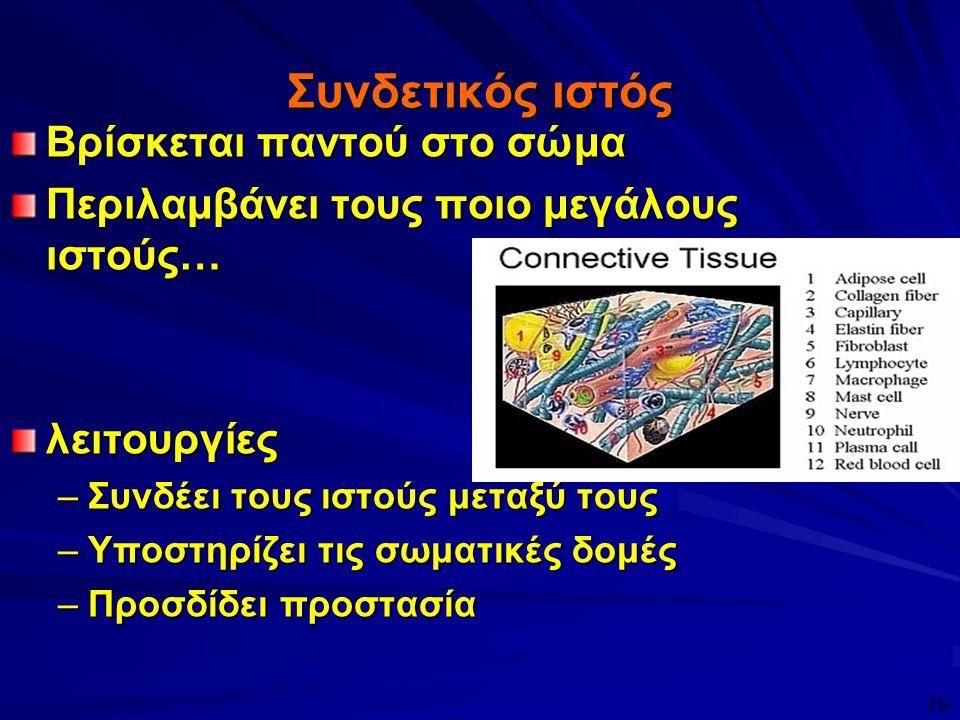ΦΥΣΙΟΛΟΓΙΑΦΥΣΙΟΛΟΓΙΑ ΣΥΝΔΕΤΙΚΟΣ ΙΣΤΟΣ Υφή X Θεμέλιος ουσία X Μεσοκυττάριο υγρό X Κύτταρα X Ινες ΣΥΝΔΕΤΙΚΟΣ ΙΣΤΟΣ Ινες X Κολλαγόνες X Ελαστικές X Δικτυωτές X Κατανομή 4 Διαφορετική σε διαφορετικούς τύπους συνδετικού ιστού u Ινώδης u Ελαστικός u Δικτυωτός ₧