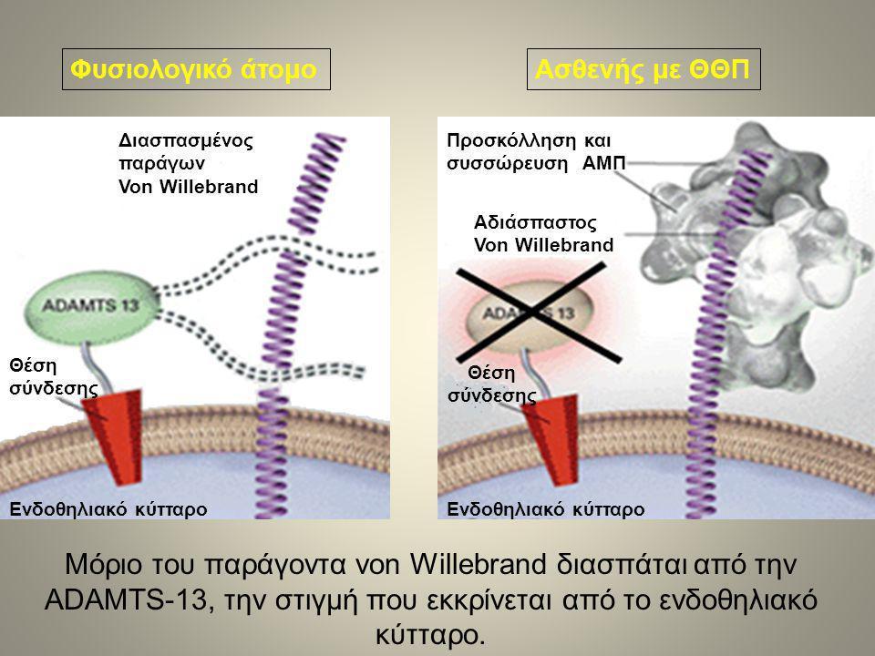 Φυσιολογικό άτομοΑσθενής με ΘΘΠ Ενδοθηλιακό κύτταρο Θέση σύνδεσης Διασπασμένος παράγων Von Willebrand Αδιάσπαστος Von Willebrand Θέση σύνδεσης Προσκόλληση και συσσώρευση ΑΜΠ Μόριο του παράγοντα von Willebrand διασπάται από την ADAMTS-13, την στιγμή που εκκρίνεται από το ενδοθηλιακό κύτταρο.