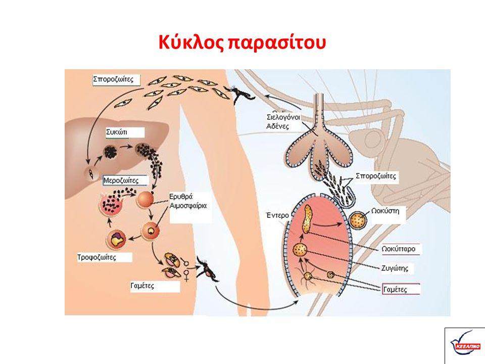 Περίοδος μεταδικότητας Οι άνθρωποι μολύνουν τα κουνούπια για όσο κυκλοφορούν στο αίμα τους ώριμα γαμετοκύτταρα Αθεράπευτοι ασθενείς = πηγή μόλυνσης κουνουπιών: - P.malariae: για αρκετά έτη - P.falciparum: για < 1 έτος - P.vivax: για διάστημα έως 5 έτη