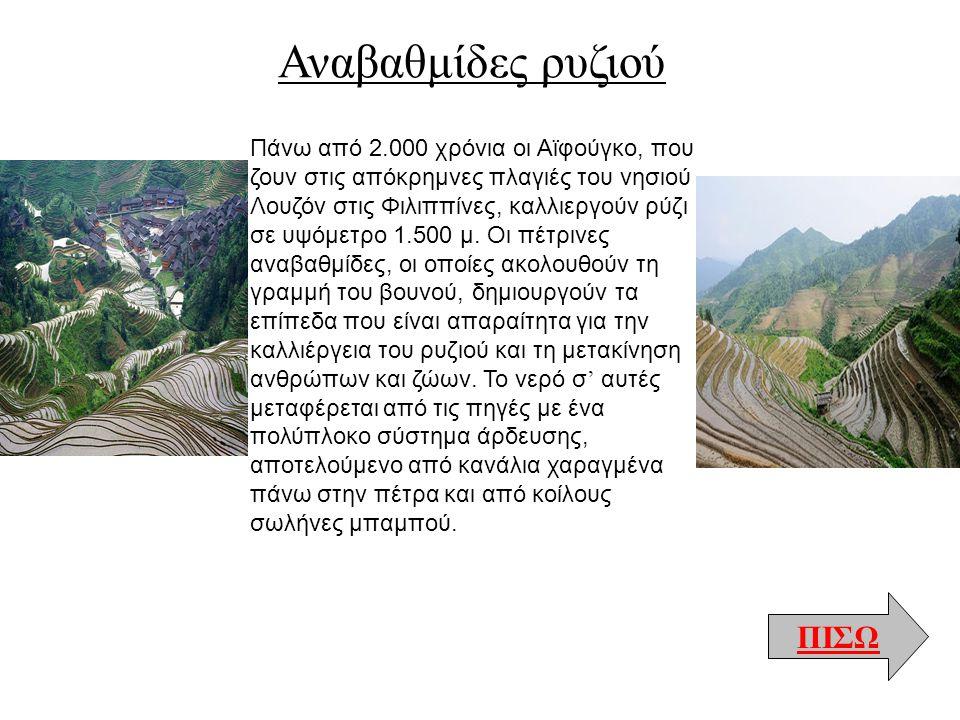 Αναβαθμίδες ρυζιού ΠΙΣΩ Πάνω από 2.000 χρόνια οι Αϊφούγκο, που ζουν στις απόκρημνες πλαγιές του νησιού Λουζόν στις Φιλιππίνες, καλλιεργούν ρύζι σε υψό