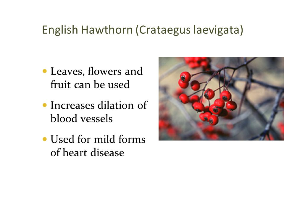English Hawthorn (Crataegus laevigata)  Leaves, flowers and fruit can be used  Increases dilation of blood vessels  Used for mild forms of heart di