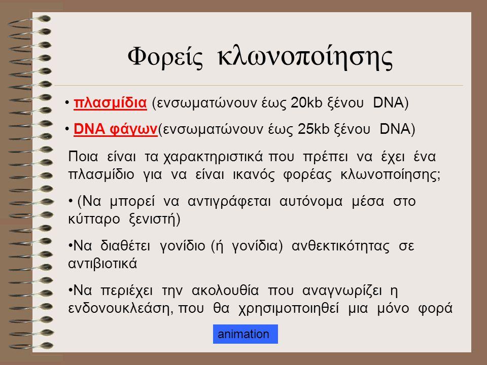 ένζυμοβακτήριο Ακολουθία αναγνώρισης Κόψιμο DNA Κάποια είδη περιοριστικών ενδονουκλεασών
